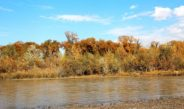 Ornithological tour to the Riparian forests of Kyrgyzstan