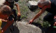 Entomological expedition to the South Tien Shan (Kyrgyzstan)