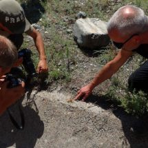 Entomological expedition to the South Tien Shan (Kyrgyzstan)