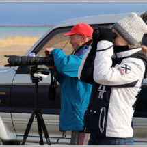 "Bird Watching in the Northern Tien-Shan – ""Birds of Issyk-Kul"""