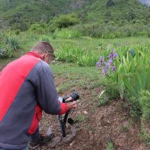 Flower tour throughout the Northwest Tien-Shan