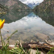 """Tulip tour """"Wild tulips of Kyrgyzstan"""", 12 days"""