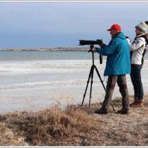 Photo of winter birds on Issyk-Kul Lake