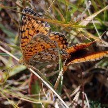Entomological tour to Tajikistan
