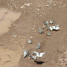 Entomological tour to Uzbekistan