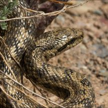 Snake tour in the mountains of Uzbekistan