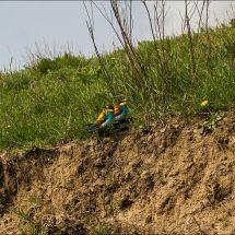 Bird watching in Uzbekistan